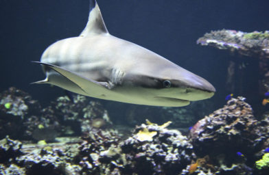 We create data & electrical services drawings for the Shark Dive at Sydney Aquarium